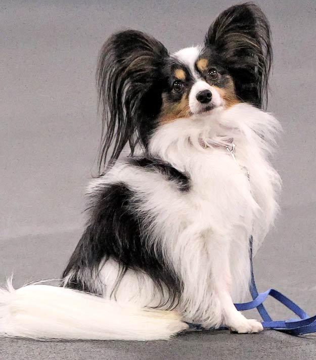 Sportsmen's Dog Training, Puppy Training